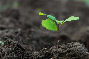 Procurement 101: The procurement sustainability business case