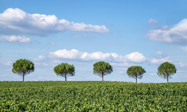 Five considerations when establishing a supplier sustainability programme