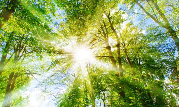 Embedding sustainability into supplier management