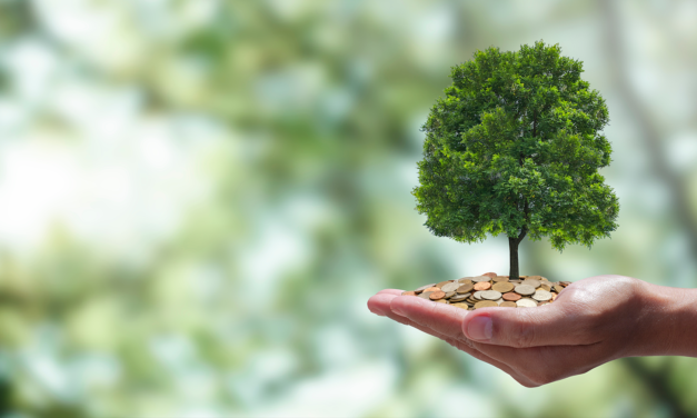 Carbon credits: an essential part of corporate sustainability, or greenwashing?
